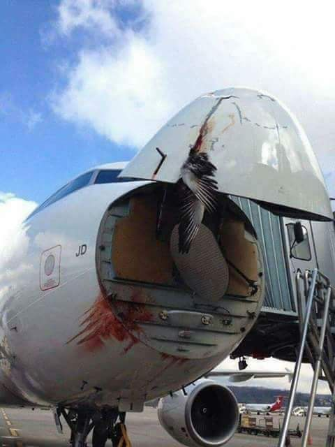 Plane destroyed by birds